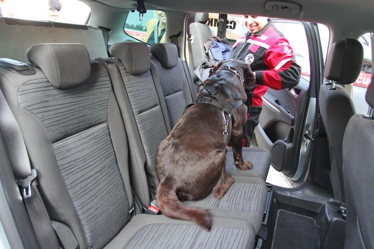 Kutya Szallitas Autoban 1